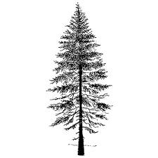 fir tree 2 lavinia sts ltd