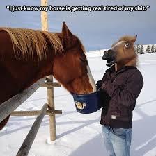 Horse Mask Meme - quit horsing around meme shuffle pinterest meme
