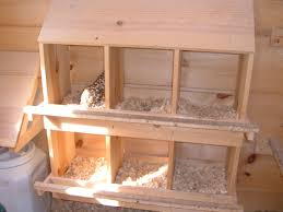 poultry nest boxes chicken nesting boxes farm pinterest