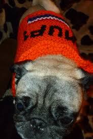 easiest custom knit dog sweater ever 8 steps