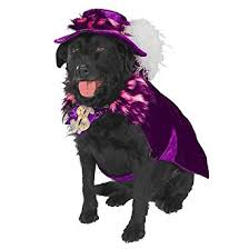 Pimp Halloween Costume Amazon Mac Daddy Le Pimp Halloween Pet Costume Medium Clothing