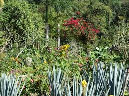 Tropical Plants Gardens Tropical Plants Garden In The Hills
