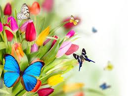image of spring flowers early spring flowers wallpaper hd desktop background