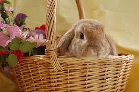 rabbit easter basket the easter bunny stories to read hellokids