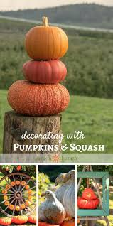 Outdoor Fall Decorating Ideas by 50 Best Garden Pumpkins Squash Gourds Images On Pinterest