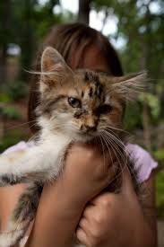 25 names for southern cats southern living