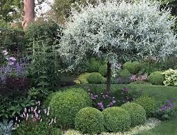 clay soil silver pear tree caroline benedict smith garden