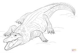nile crocodile coloring page free printable coloring pages