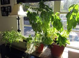 pretty windowsill herb garden kit grow herb garden grow kit in