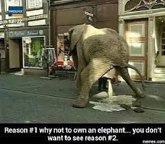 Elephant Meme - reason 1 not to buy an elephant funny clone