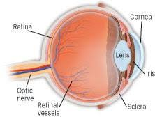 Diabetic Blindness What Is Diabetic Retinopathy American Academy Of Ophthalmology