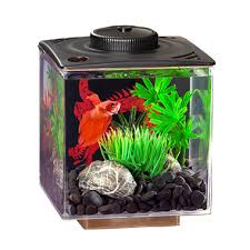 Zombie Aquarium Decorations Fish Products Pet Valu Pet Store Pet Food Treats And Supplies