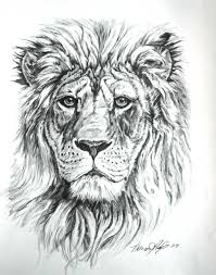 47 lion tattoo drawings pencil images lion