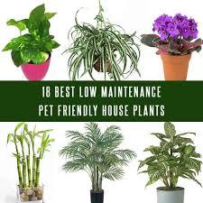 best house plants 18 best low maintenance pet friendly house plants gardenoid