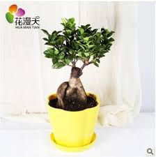 Best Plant For Office Desk Delectable 80 Plants For Office Desk Design Decoration Of 9 Low