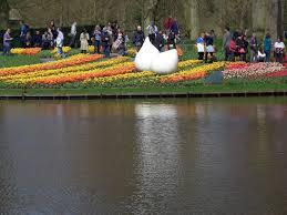 through may 16 keukenhof gardens rolls out the flower carpet