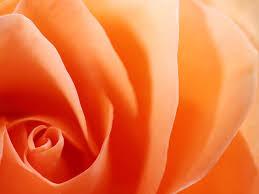 shades of orange shades of orange shades of orange pinterest