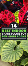 best indoor shade plants for low light rooms