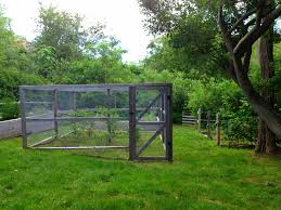 blueberry cage raised vegetables beds staked rows of blackberry