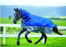 Outdoor Rugs For Horses 8 Of The Best Heavyweight Turnout Rugs Hound