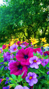 Photos Flowers Gardens by Bright Colored Flowers For The Garden Pictures Photos And Images