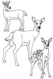 baby deer coloring pages printable kids colouring of animal bucks