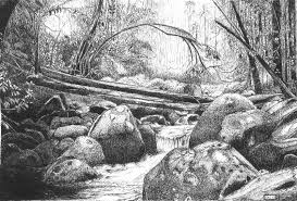 drawn jungle rainforest pencil color drawn jungle rainforest