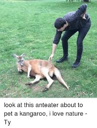 Anteater Meme - c5 look at this anteater about to pet a kangaroo i love nature ty