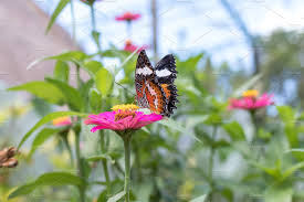 exotic butterfly on flowers beautiful butterfly and flower in the