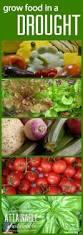 7340 best vegetable gardens u0026 growing food images on