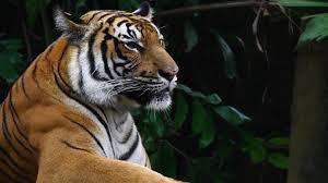 wwf tiger day