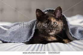 Kitten Bed Kitten Bed Stock Photo 332894507 Shutterstock