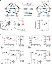 proliferation markers are associated with met expression in