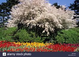 Botanic Garden Bronx by New York City Bronx Botanical Garden Spring Crabapple Tree And
