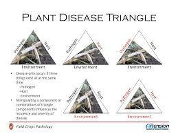 Home Design 3d Jogar by 28 Plant Disease Triangle The Disease Triangle A Plant