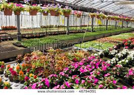 plant nursery stock images royalty free images u0026 vectors