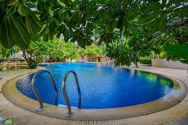 what plants to plant around pool the great backyard place the