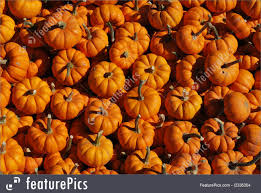 fall pumpkins background pictures mini pumpkins background