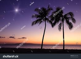 christmas hawaii palm trees stars stock photo 66697405 shutterstock