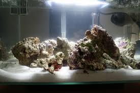 Live Rock Aquascaping Aquascaping My First Nano Reef