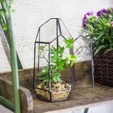 indoor tabletop irregular glass geometric terrarium succulent