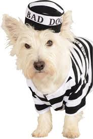 prisoner dog pet costume buycostumes com