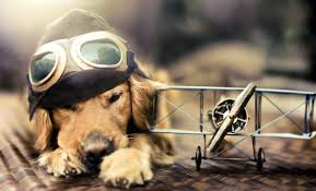 dog wallpapers cute dog wallpapers about doggies
