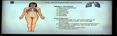 What Is Human Anatomy And Physiology 1 Anatomy And Physiology Help Chapter 1 Segment 2 Overview Of Organ