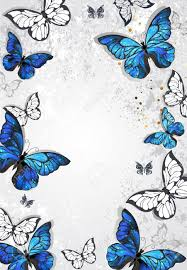 frame with blue morpho butterflies on gray textural