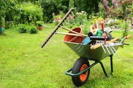 cura giardino giardino ecco gli errori da evitare per la cura delle piante