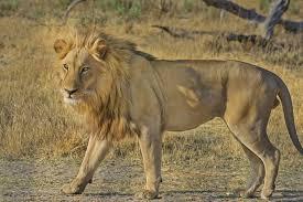 free stock photo of africa animal botswana