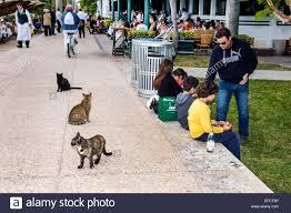 Seeking Miami Miami Florida South Pointe Park Feral Cats Seeking Food