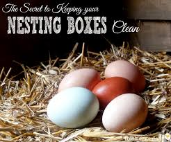 the secret to keeping your nesting boxes clean block those boxes