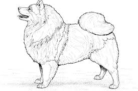 coloring pages of dogs and puppies very strong puppies dog dog
